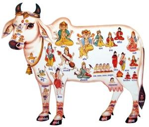 cow_devatas